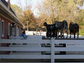 Ziegen im Cosley Zoo Goats at Cosley Zoo © Lotzman Katzman