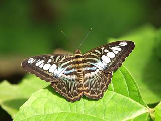 Schmetterling im Papiliorama. © DreamShoot by Marcel Steger