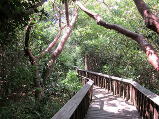 Gumbo Limbo boardwalk © Infrogmation