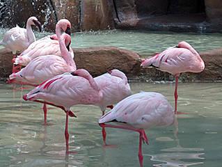 Flamingos im Parco Faunistico. © graphia