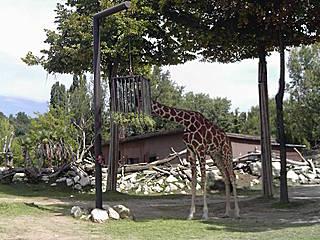 Giraffengehege im Parco Natura Viva © ComùnicaTI