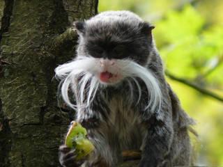 Tiere im Affenpark Apenheul © havankevin