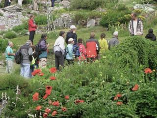 Jardin Botanique alpin © Jardin Botanique alpin