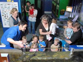 Ilfracombe Aquarium © Ilfracombe Aquarium
