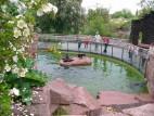 © Zoologischer Garten Halle - Seebärenanlage